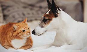 Especial pets: móveis em madeira, poliéster e ecológicos para cães e gatos